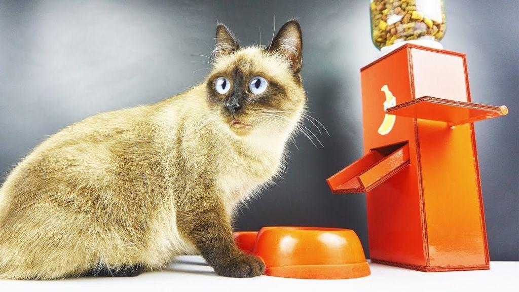 Как сделать автокормушку для кошек своими руками