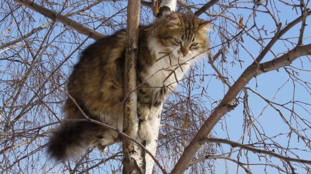 помощь кошке слезть с дерева