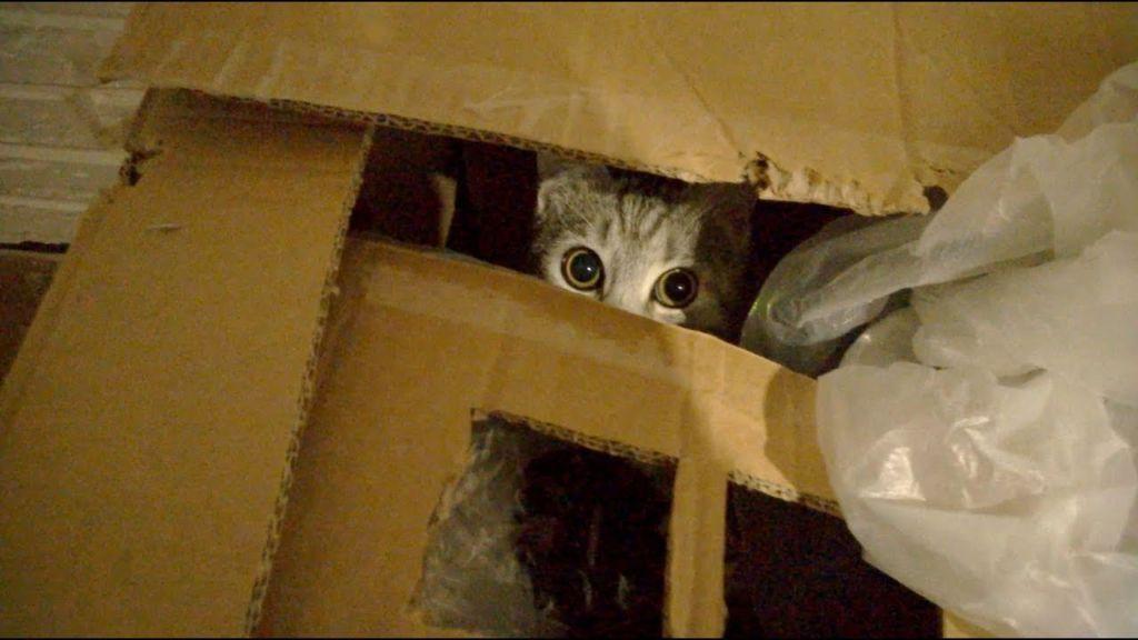 Кошки обычно далеко не убегают, так как привязаны к месту