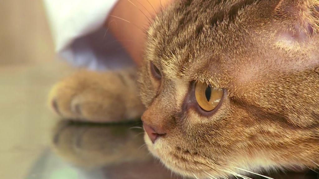 Правильное лечение глистов у котов и кошек в домашних условиях