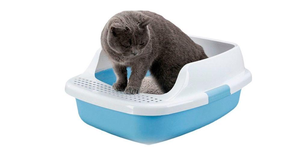 9 причин, почему кот какает с кровью и лечение в домашних условиях