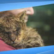Симптомы и лечение саркоптоза у кошек