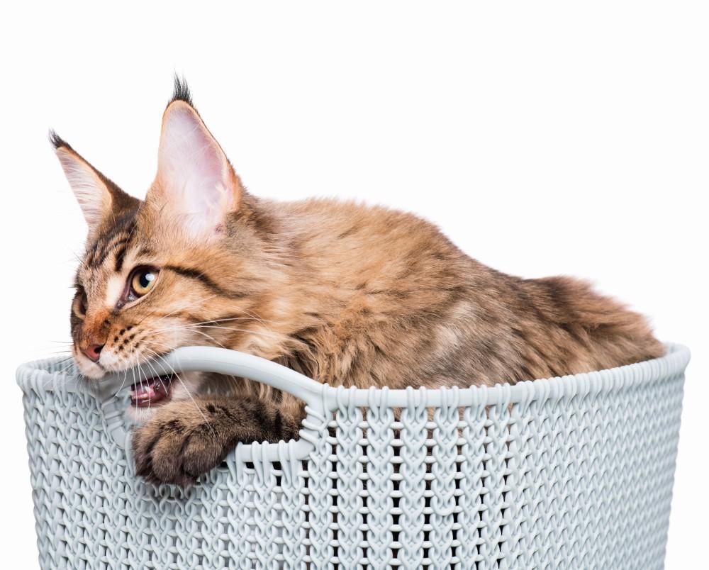 Метки — это инстинктивный ритуал, с помощью которого кот передает своим сородичам определенное послание
