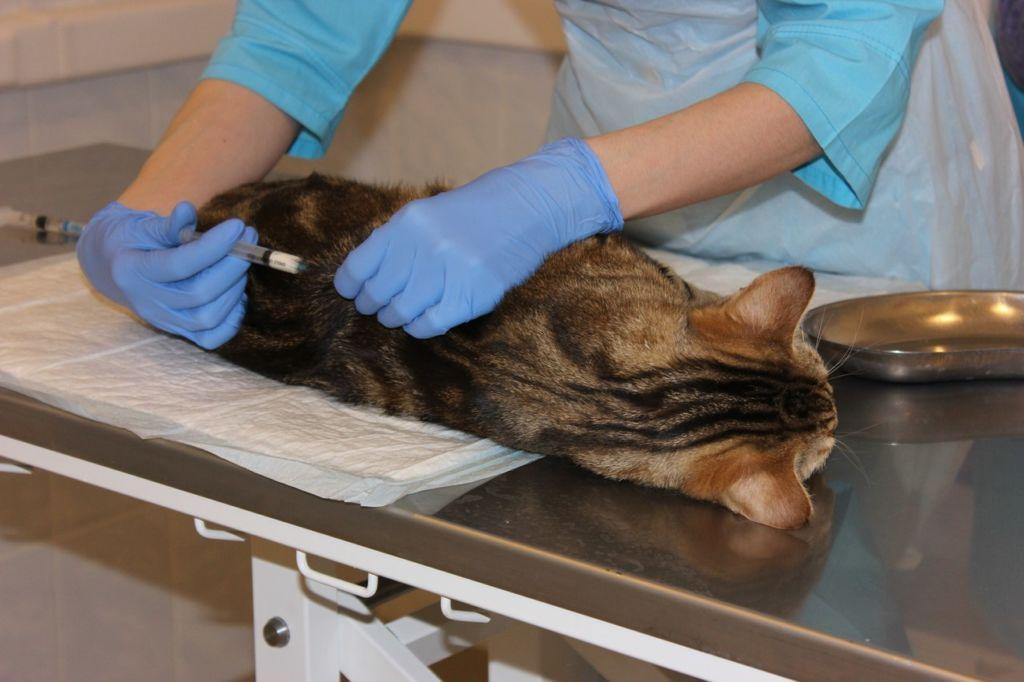 Стерилизацию практикуют для того, чтобы кошка не заболела различными болезнями