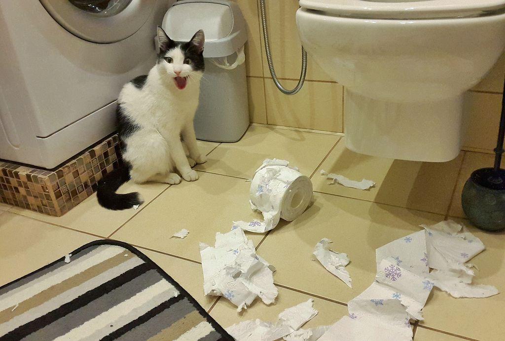 Кошки не понимают ценности вещей