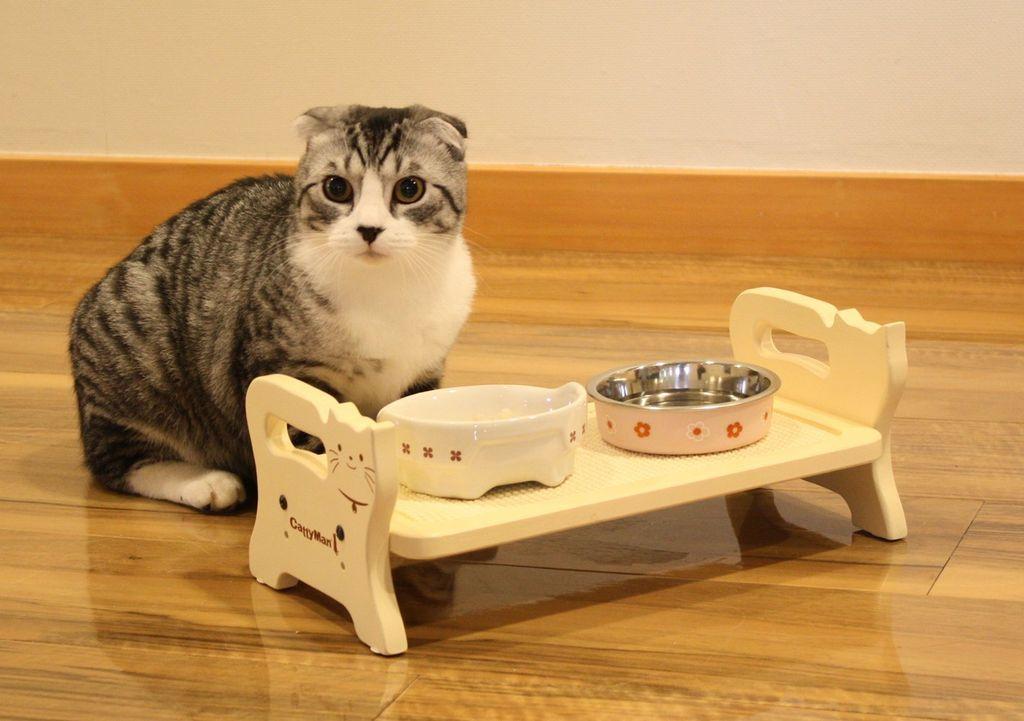 Котенок может отказываться от корма если миска грязная или плохо пахнет