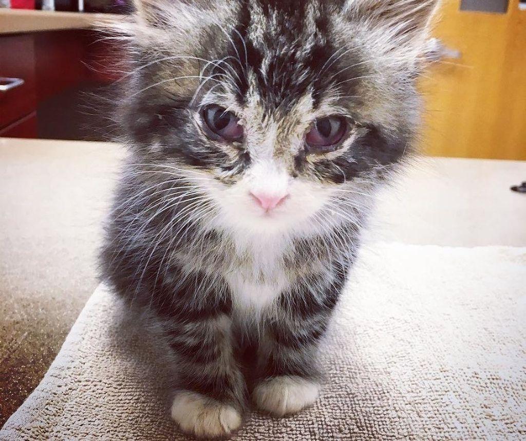 Отказ котенка от еды и питья может говорить о наличии какого-либо заболевания