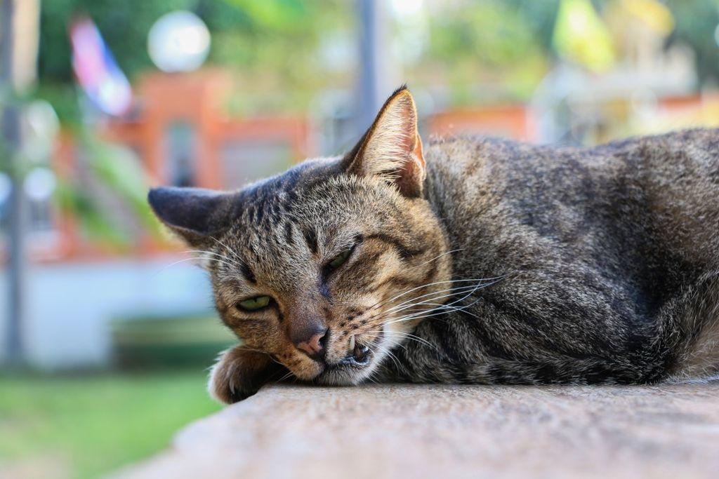 Гипертермия проявляется высокой температурой, апатией и угнетенным состоянием животного