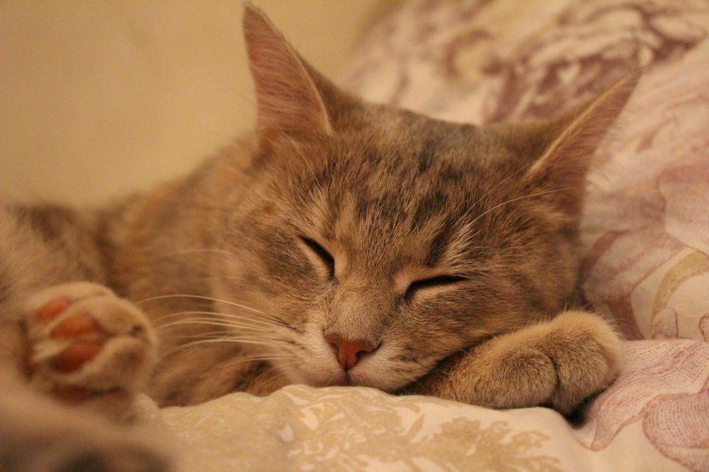 Во время сна нос кошки остается сухим