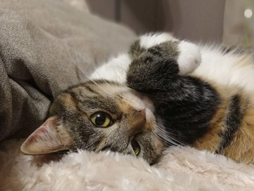 Если обратили внимание на первые признаки заболевания у кота, то шанс на выздоровление возрастает