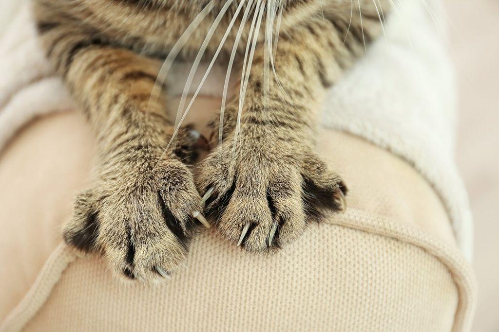 Нормальное количество - 20 пальцев на передних и задних лапах
