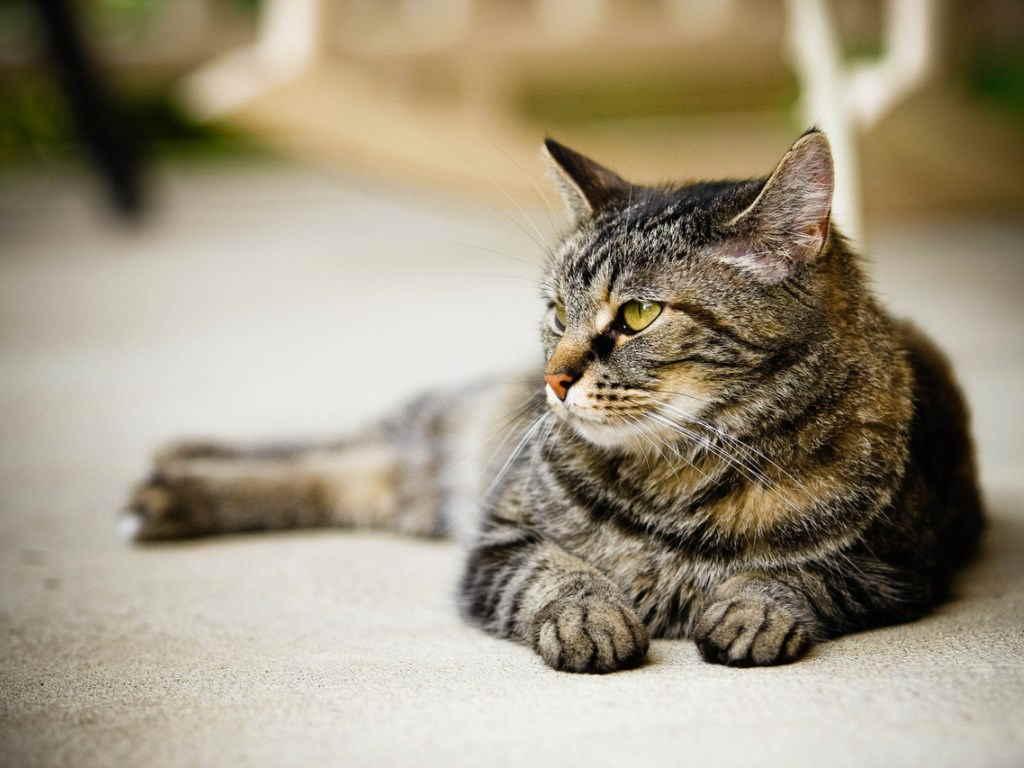 Единственное положительное качество кошачьей чумки – ее безопасность для людей