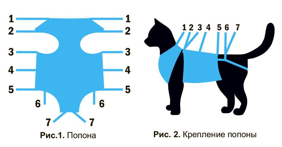 Схема, как надеть бандаж на кошку