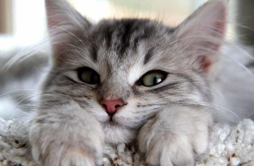 Что это, когда у кошки глаза наполовину закрыты пленкой