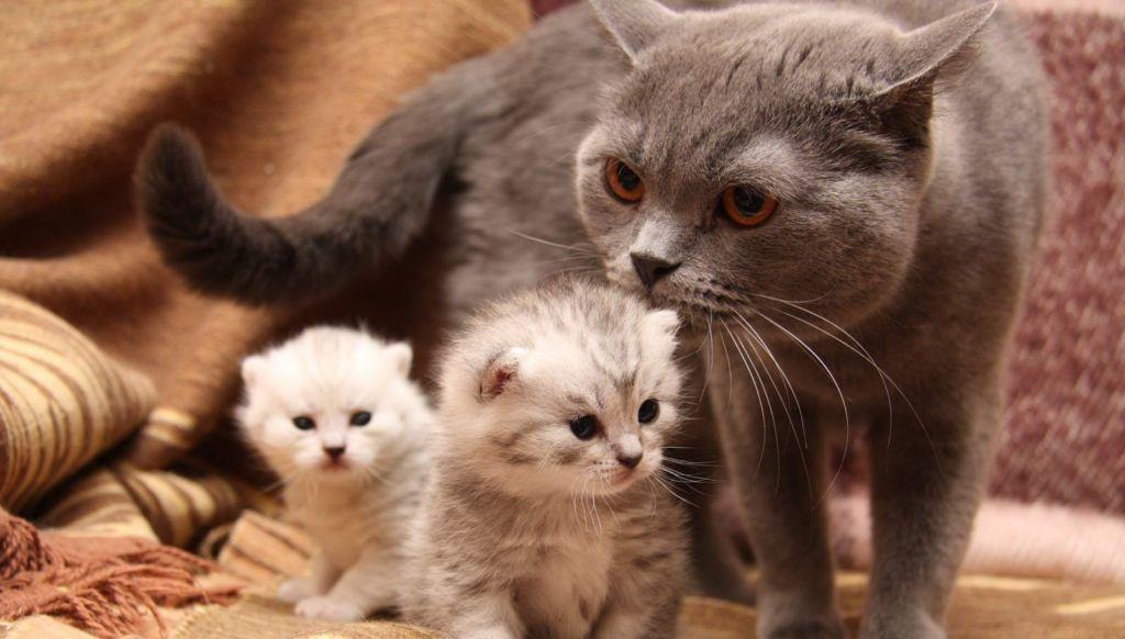 Средства против блох для кошек станут первым и надежным помощником в борьбе с паразитами