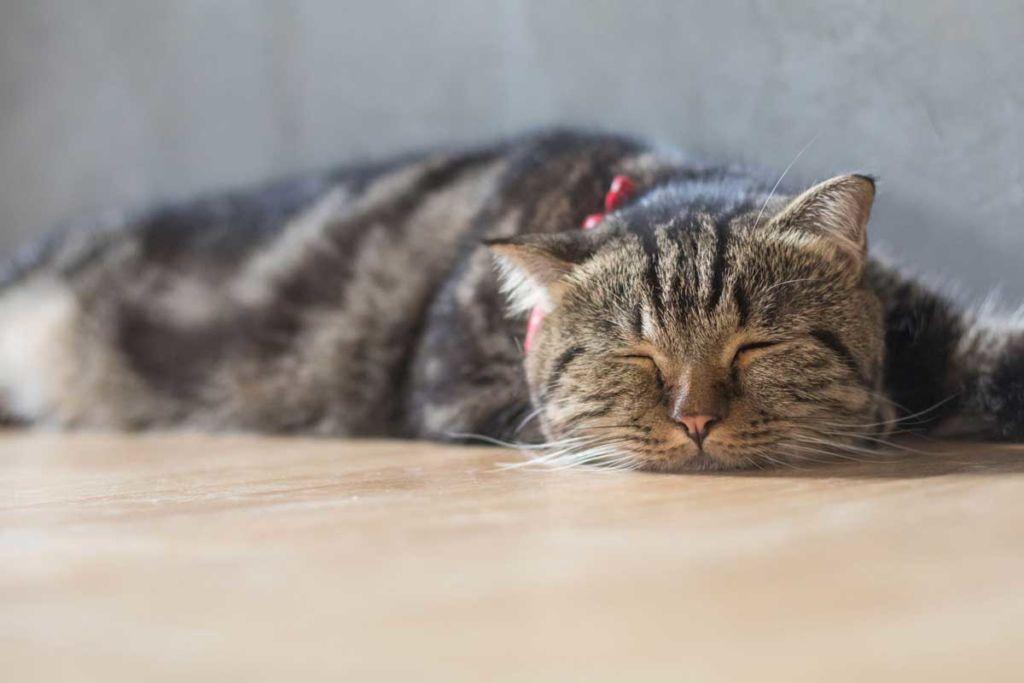 Во время лечения и после кошка должна пить много воды