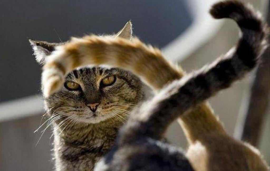 Хвост кошки может многое сказать о ее настроении
