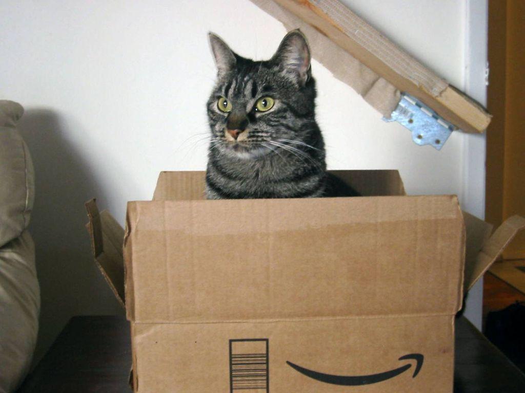 Кошка использует коробку в качестве домика