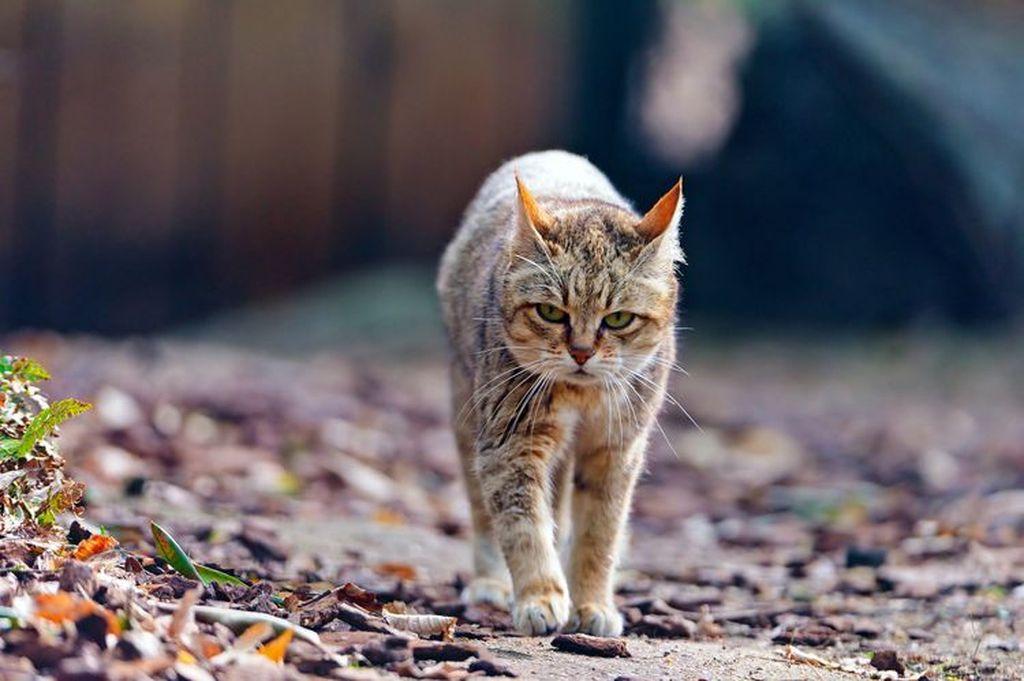 Как правильно приручить кота, кошку или котенка