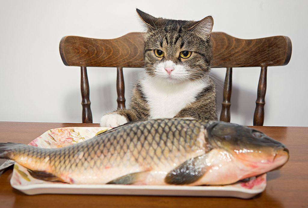 Наиболее полезны для кошек красная рыба и скумбрия