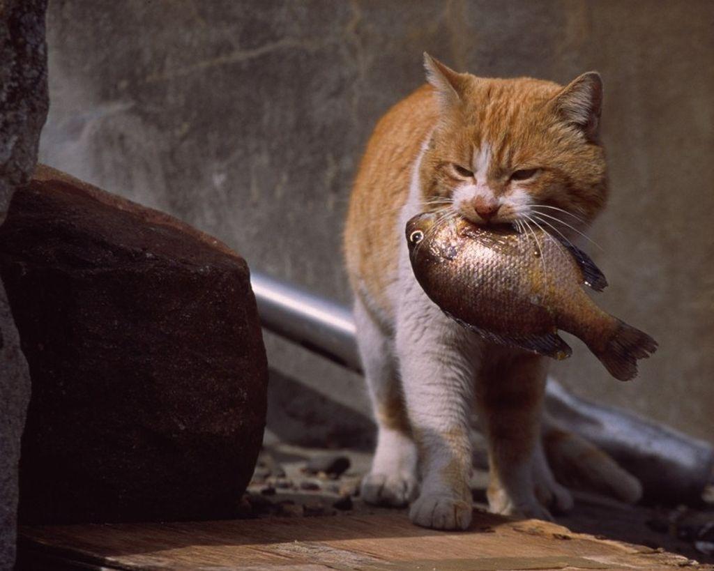 Высокую опасность для кошек несут все виды речных рыб
