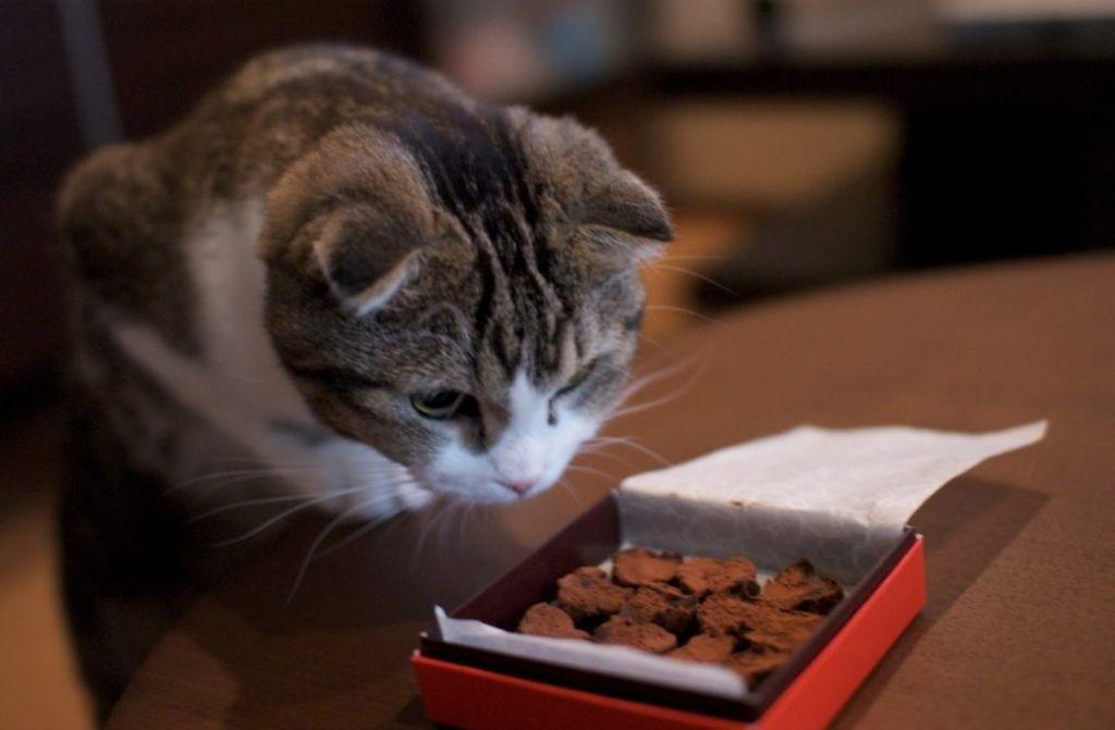 Кошки не способны воспринимать сладкий вкус