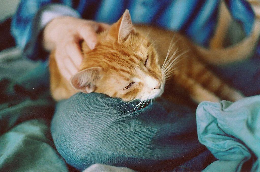Сон на человеке является одним из проявлений любви и преданности
