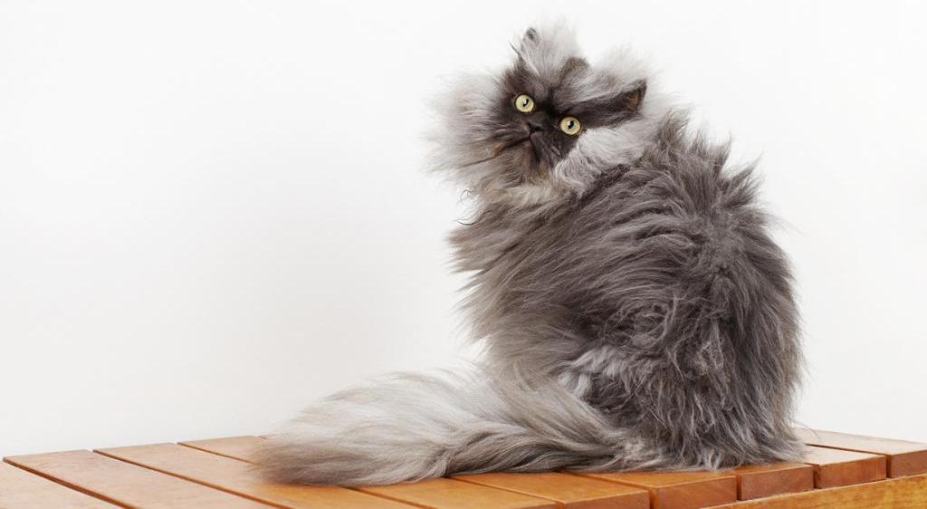 5 самых известных и знаменитых котов в мире