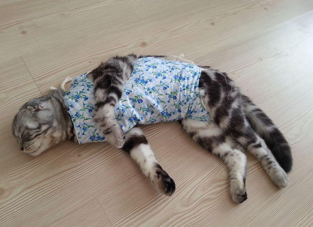 Низкая температура свойственна кошкам, перенесшим операцию