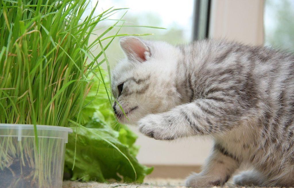 Питание котят должно быть насыщено витаминами