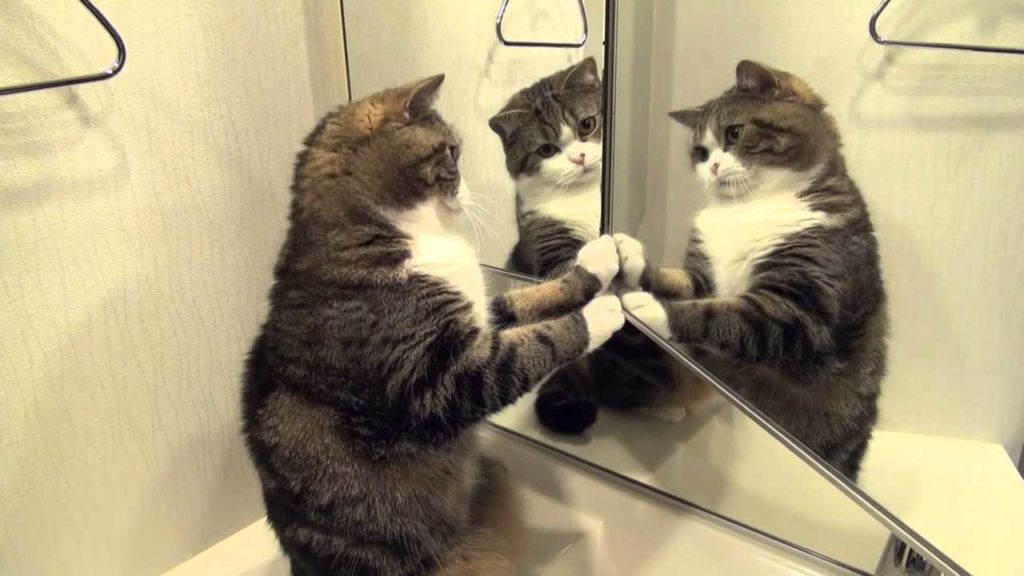 Как кошки видят наш мир и почему у котов светятся глаза