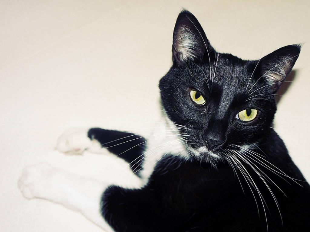 Симптомы и лечение асцита у кошек и собак