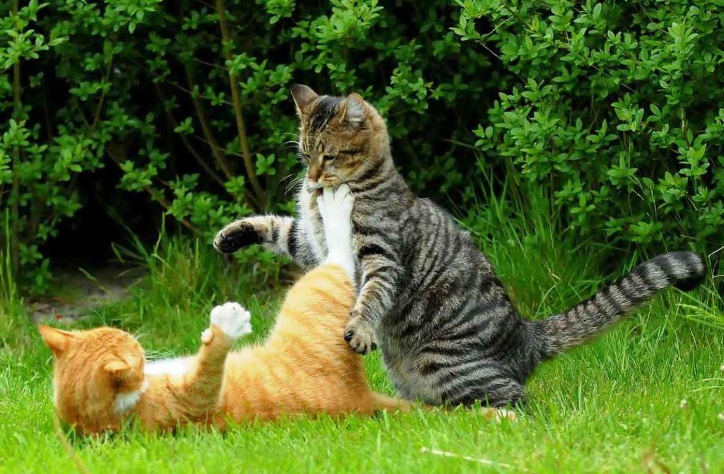 Для полных кошек очень важно увеличить физическую активность