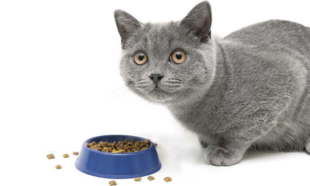 Зола в кормах для кошек
