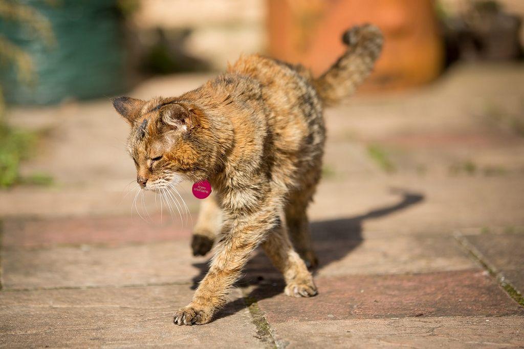 У пожилых кошек выпадение зубов считается нормой