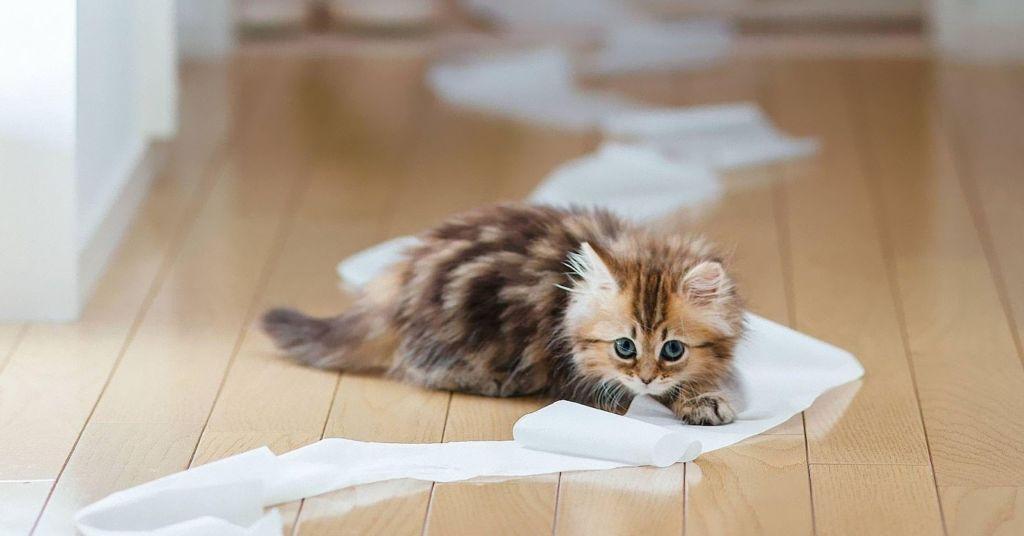 Как часто котята ходят в туалет по маленькому и по большому