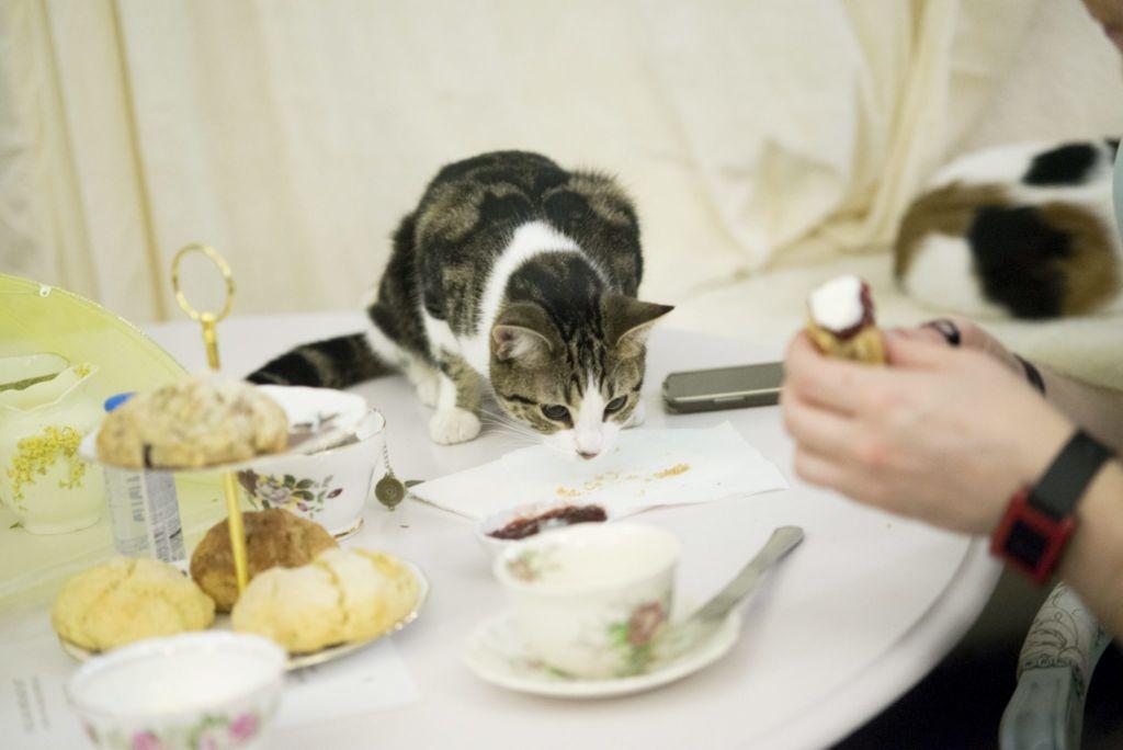 Кот ест на столе с тарелки хозяина