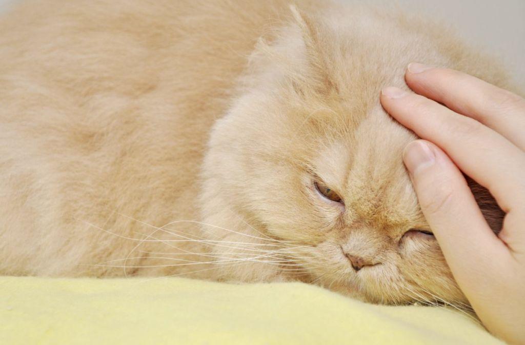 6 видов стерилизации кошек и с какого возраста можно делать