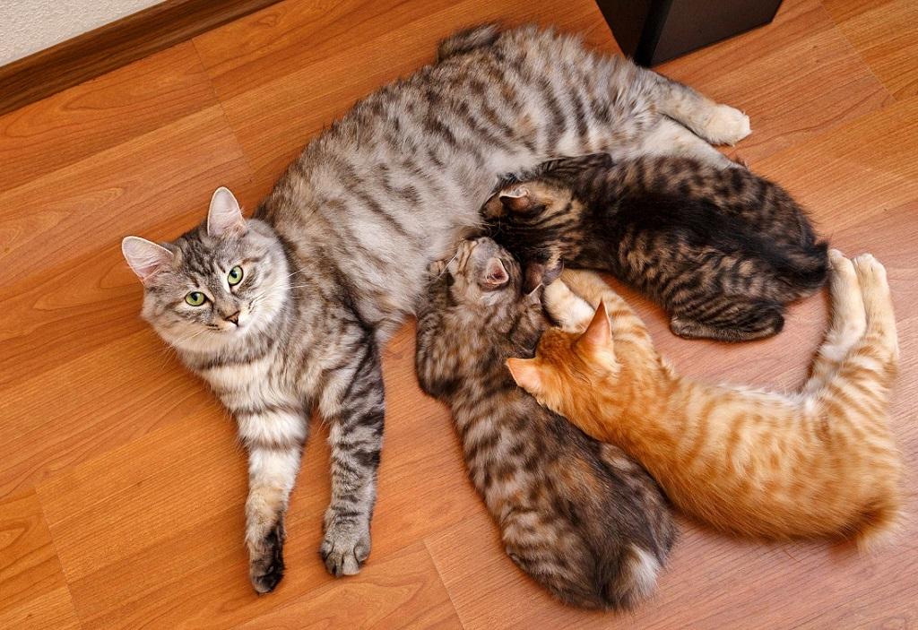 Кошки заботятся и выкармливают потомство