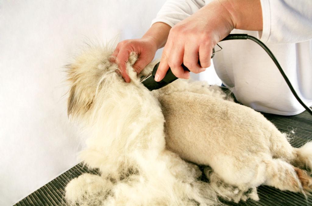 Кошачий груминг – это забота о здоровье животного