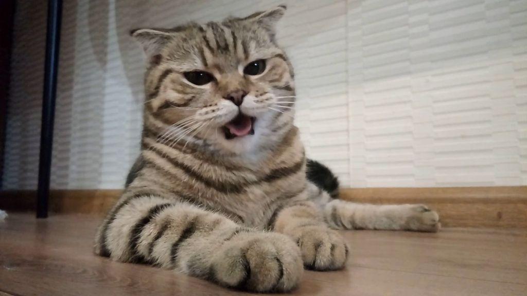 Иногда кот может тяжело дышать после физических нагрузок