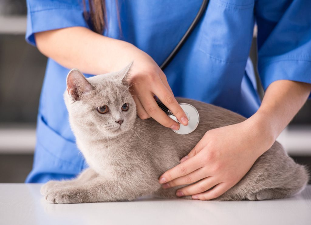 При появлении опасных симптомов нужно срочно обратиться к ветеринару