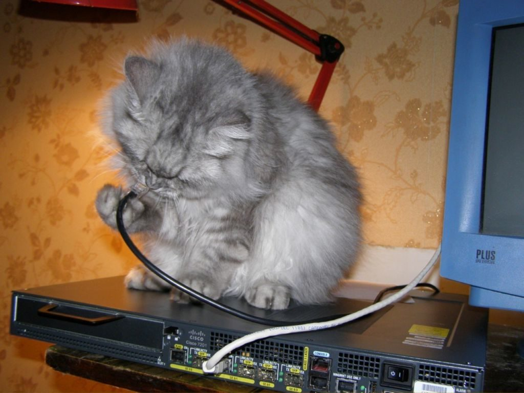 Перед тем, как кота отучить грызть провода, необходимо выяснить причины