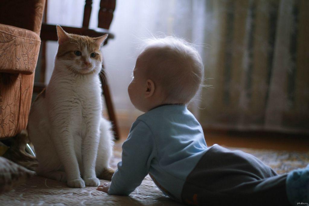 Никогда не оставляйте маленьких детей без присмотра ни с котятами, ни со взрослыми котами и кошками