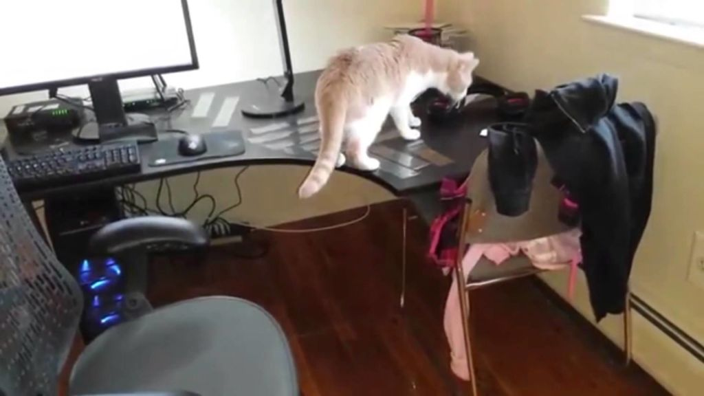 Кошки – очень любопытные животные