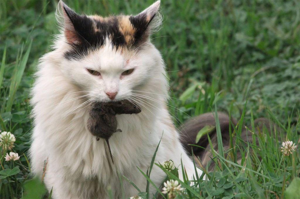 Когда кошки приносит добычу - это также своеобразное проявление любви