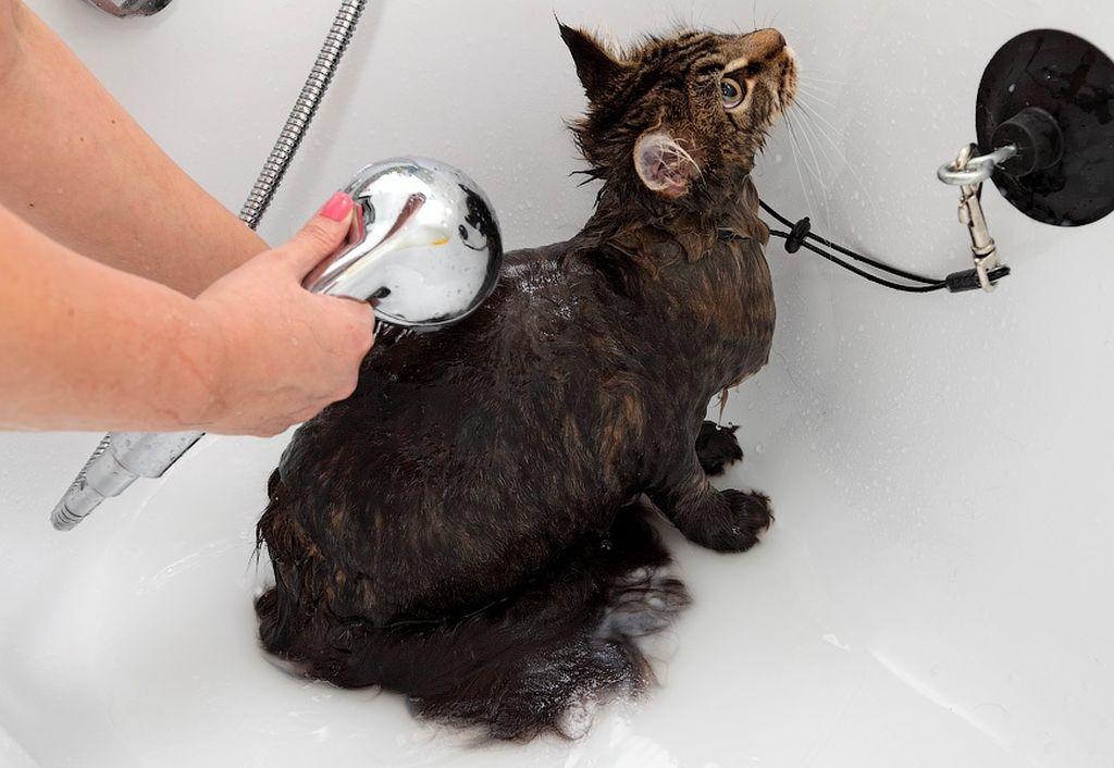 Купание кошек: советы и рекомендации по правильному уходу за животным
