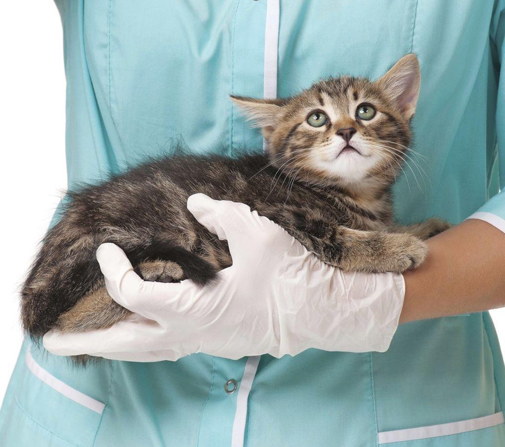 При наличии опасных симптомов нужно обязательно показать питомца ветеринару