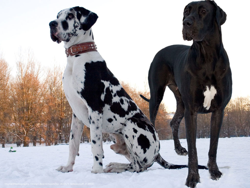фото дог собака цена