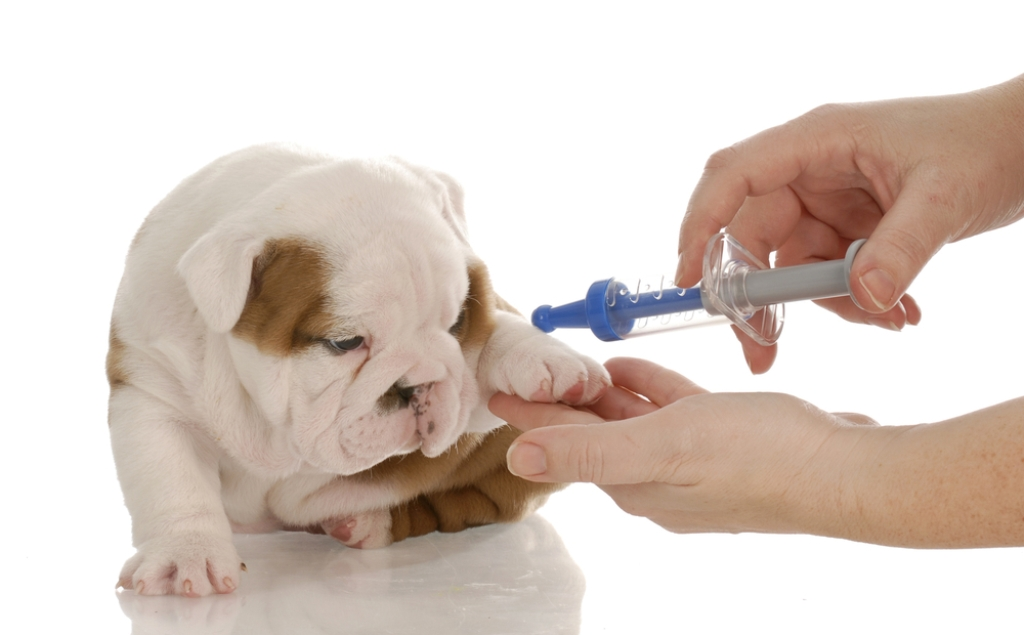 Симптомы и лечение инфекционного и вирусного гепатита у собак